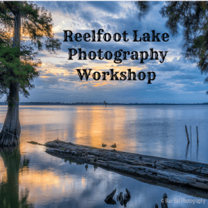 Reelfoot Lake Photography Workshop Blair Ball Photography