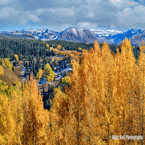 Colorado Aspens Photography Workshop