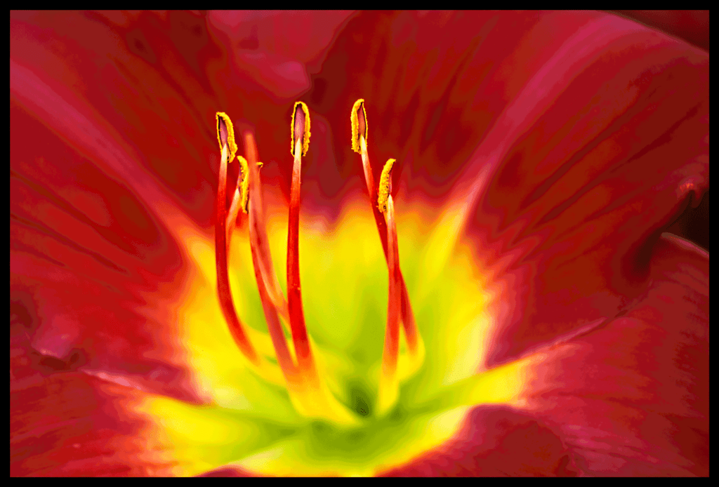 Stamens-in-the-light_Blair-Ball-Image