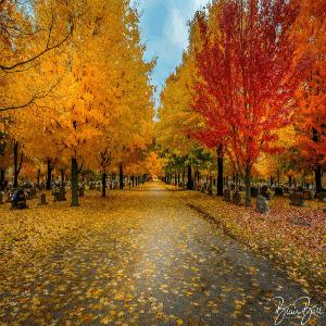 Arkansas Fall Color Photo Workshop